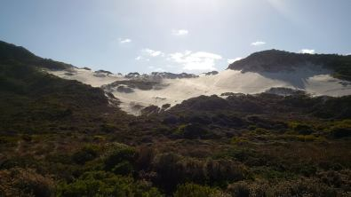Betty's Bay Sand Dune