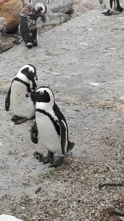 Penguin Park 2